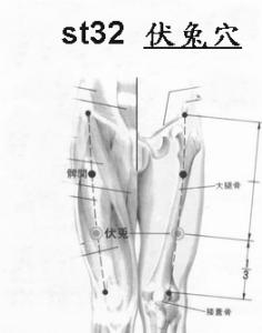 ST32伏兔
